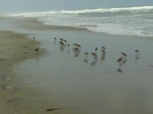aves del mar